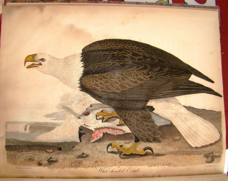 AMERICAN ORNITHOLOGY; OR THE NATURAL HISTORY OF THE BIRDS OF THE UNITED STATES. Alexander WILSON, HAND-COLORED PLATES.