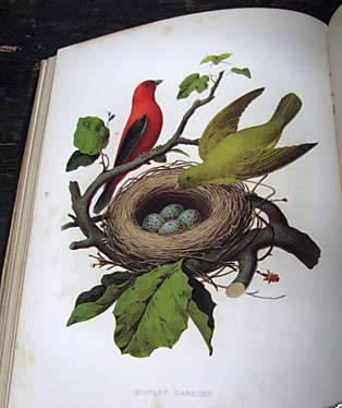 NESTS AND EGGS OF BIRDS OF THE UNITED STATES. Thomas GENTRY