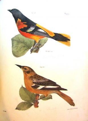NATURAL HISTORY OF NEW YORK. ZOOLOGY OF NEW YORK, OR THE NEW YORK FAUNA.... PART II. BIRDS. James...