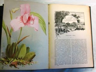 VICK'S MONTHLY MAGAZINE, Volume XIII, 1890, and [Volume XIV, 1891]. BOTANICAL CHROMOLITHOGRAPHS