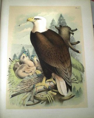 STUDER'S POPULAR ORNITHOLOGY. THE BIRDS OF NORTH AMERICA: DRAWN AND COLORED FROM LIFE and...